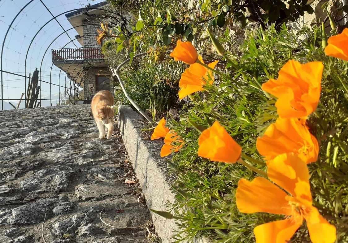 La gatta Ginger accoglie i clienti